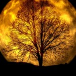 Picture of Mystic Moon